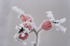 Ice-flower Stock Photography