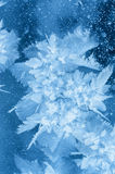 Ice flower. Royalty Free Stock Photography