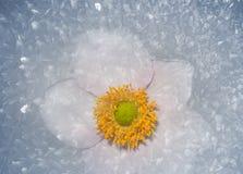 Ice flower Stock Photo