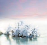 Ice flower Stock Photography