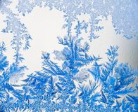 Free Ice Flowers 08 In Blue Stock Photography - 3953192