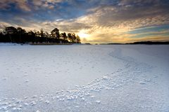 Ice flowers in winter afternoon. Photo from the sea coast of Helsinki, Finland, with some ice flowers in the foreground Royalty Free Stock Photography