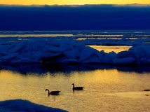 Ice Flows at Dawn. Late iceflows populate Lake Superior as two geese greet the sunrise Royalty Free Stock Images