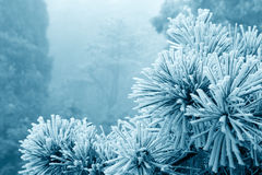 Ice fog on tree Royalty Free Stock Image