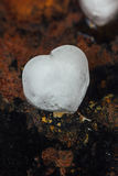 Ice in form of hearts on black background starting to melt. Royalty Free Stock Images