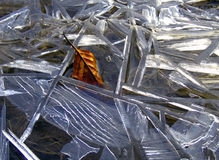Ice-forms. Beech-leaf surrounded geometrical Ice forms stock photos