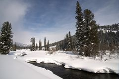 Ice free snow-bound mountain river in winter Royalty Free Stock Images