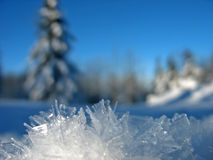 Ice Frost. In the Winter Stock Photos