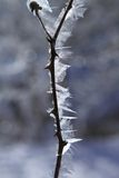 Ice frost in winter. On a  branch Royalty Free Stock Photography