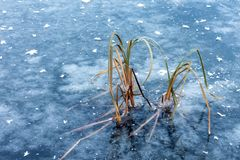 Frozen lake blue. A sharp unexpected decrease of temperature royalty free stock photos