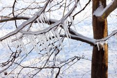 Ice on a frozen tree Stock Images