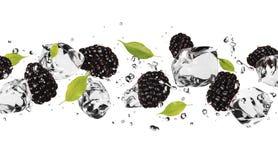 Ice fruit stock image