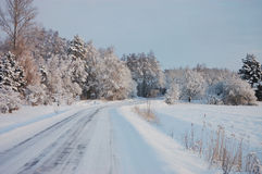 Ice-glazed road. And snow covered forest in winter stock images