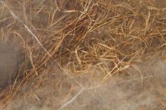 Ice grass Stock Photo