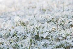 Ice on grass Royalty Free Stock Photos