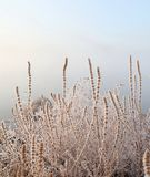 Ice and grass royalty free stock photo