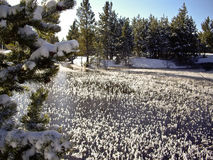 Ice grass on the river in Yellowstone Stock Photo