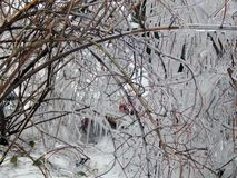 Ice hanging on the branches of trees Royalty Free Stock Photo