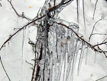 Ice hanging on the branches of trees Royalty Free Stock Photos