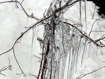 Ice hanging on the branches of trees Stock Images