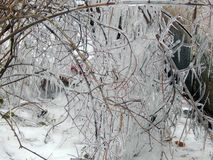 Ice hanging on the branches of trees Stock Photography