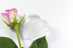 Ice heart on white abstract valentine love background Stock Image