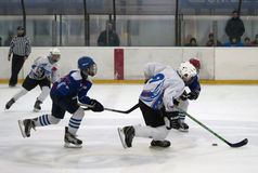 Ice hockey players in action-3. BELGRADE,SERBIA-NOVEMBER 24:Unidentified ice hockey players in action with puck at  Belgrade trophy  ice hockey tournament Royalty Free Stock Image