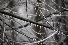 Woodland Limbs Dripping with Ice. Ice and icicles coat limbs after a winter storm in North Carolina royalty free stock photography