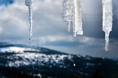 Ice icicles hanging from the roof of the shelter in the Giant Mountains Stock Image