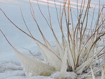 Ice icicles Stock Photos