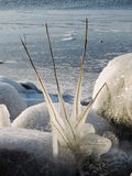 Ice icicles on plant Stock Photos