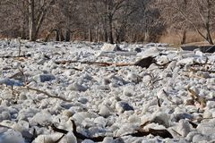 Ice jam on Humber River at first weir Stock Photography