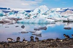 Ice lagoon and flock of birds Royalty Free Stock Photo