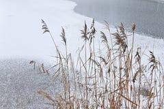 Ice on lake royalty free stock image
