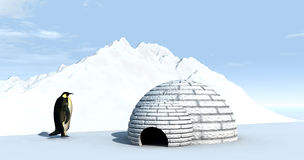 Ice Land 4. A penguin by an igloo home Stock Images