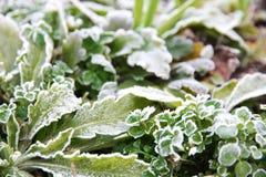 Ice on leaf Royalty Free Stock Photos