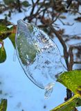 Ice leaf Royalty Free Stock Images