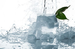 Ice, leaf and splashes of water Royalty Free Stock Photo