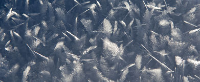 Ice leaves - background Royalty Free Stock Images