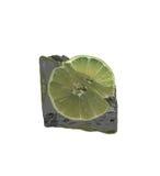 Ice lemon Stock Photo