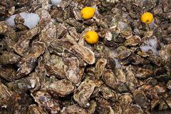 Ice lemon and many oysters. Ice and three lemon on oysters background pattern Royalty Free Stock Photo