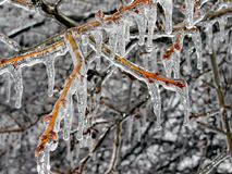 Ice Limb Royalty Free Stock Image