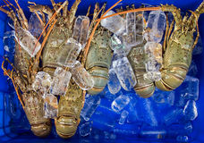 Ice Lobster Sea food. Royalty Free Stock Image