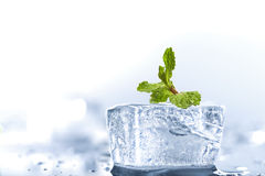 Ice mint Stock Image
