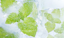 Ice mint. Ice cubes and fresh mint royalty free stock images