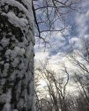 Ice. New York Nature Stock Image