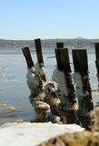 Ice on Old River Pilings. Winter scene with ice on old wooden pilings along the Hudson River just north of New York City with the Tappan Zee Bridge in the Royalty Free Stock Photography
