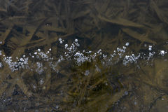 Ice pattern in shallow water Stock Images