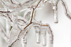 Ice patterns and texture on branches Stock Photos