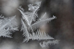 Ice patterns Royalty Free Stock Photo
